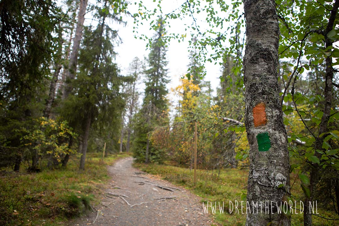 Riisitunturi NP Fins Lapland wandelen