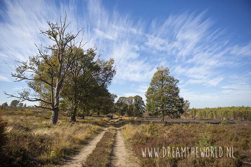 Sallandse Heuvelrug wandelroute heide Haarlerberg