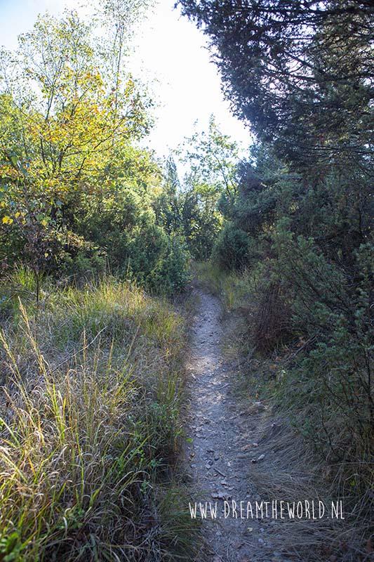 Sallandse Heuvelrug wandelroute heide