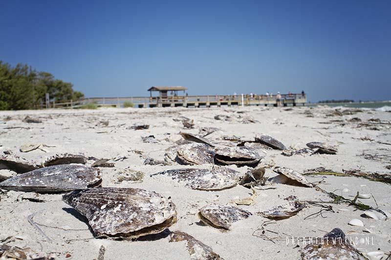 Sanibel Island schelpen Florida