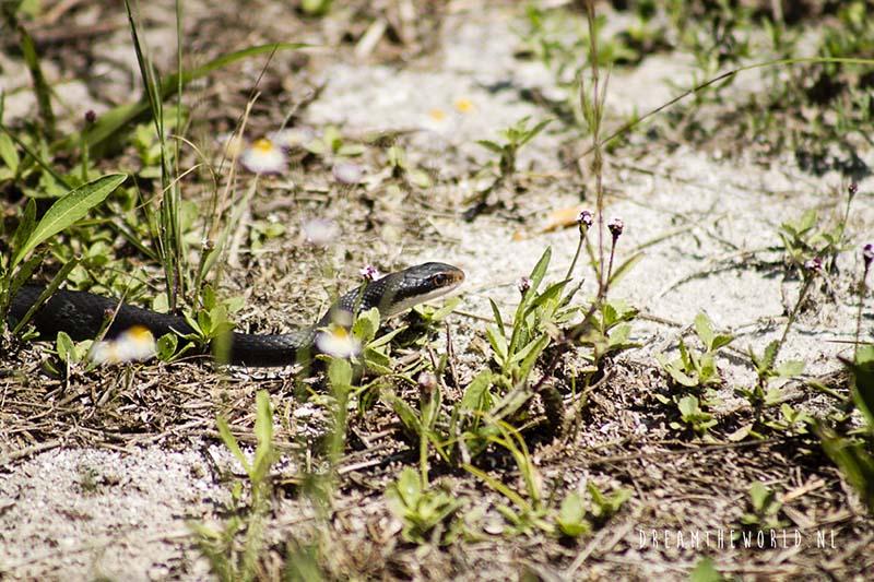 Sanibel Island slang Florida