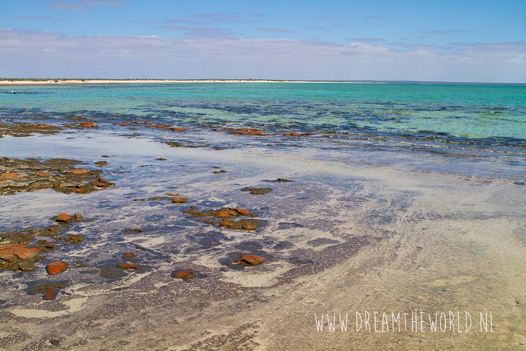 Shark Bay stromatolieten
