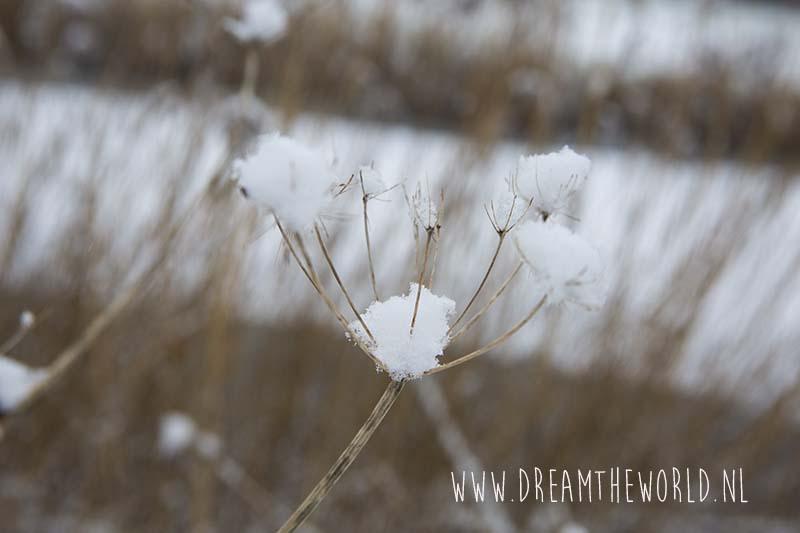 Closeup bloem met sneeuw