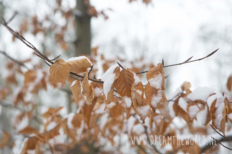 Sneeuw op blad