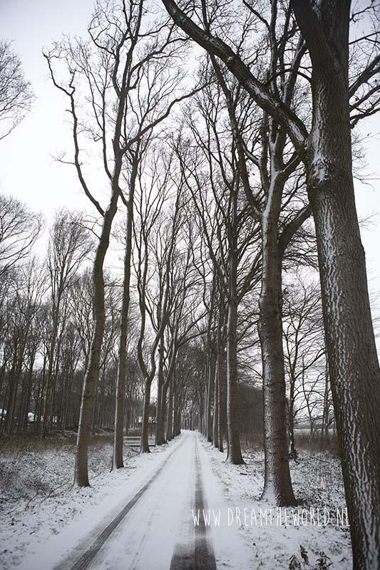 Laan met bomen in sneeuw Ter Hooge