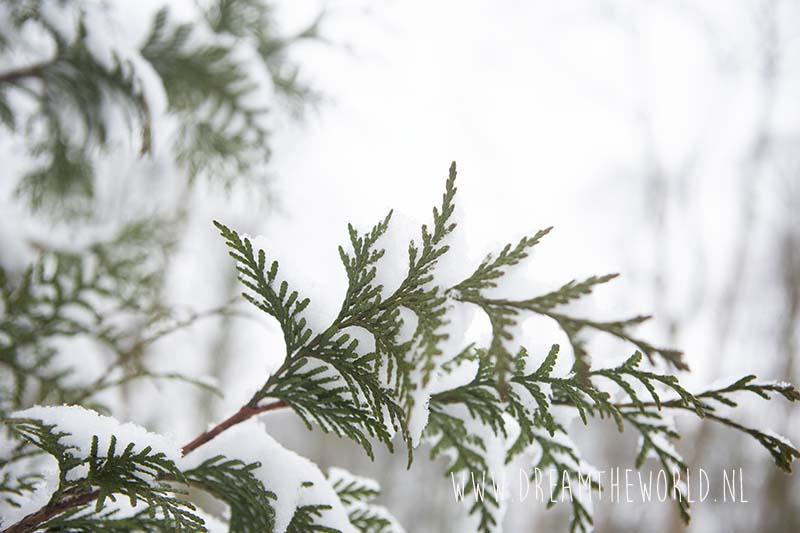 Closeup conifeer met sneeuw