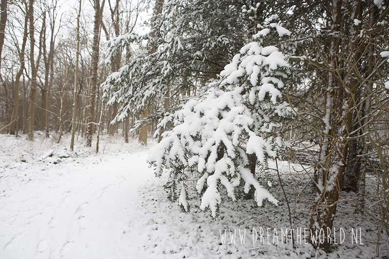 Conifeer met sneeuw