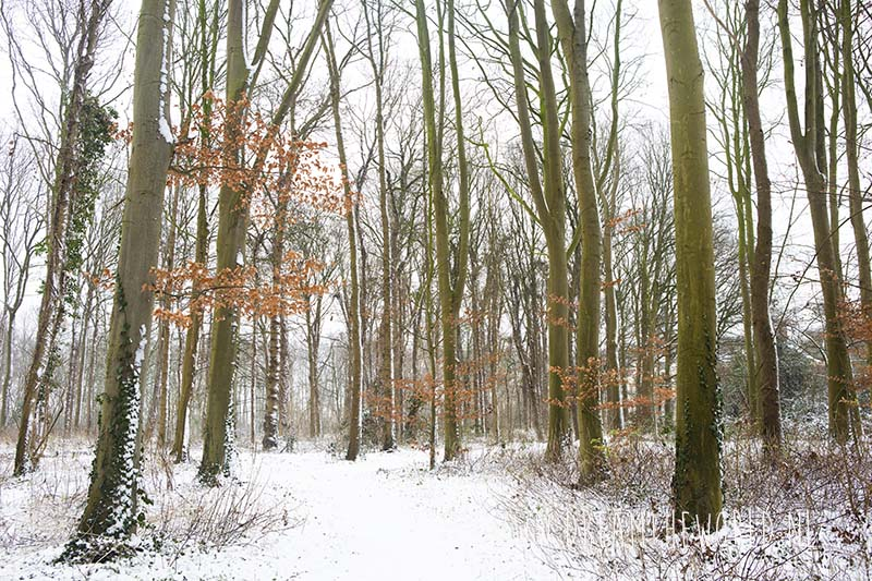 Sneeuw Ter Hooge