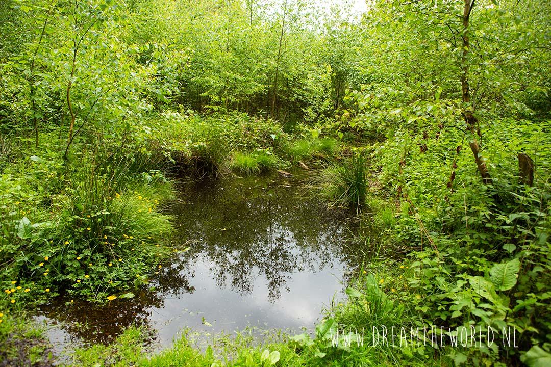 Waterpoel in Vijlenerbos