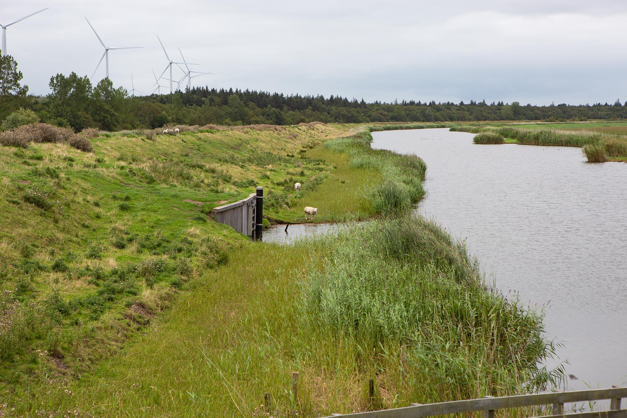 wandelen Noord-Hollandpad