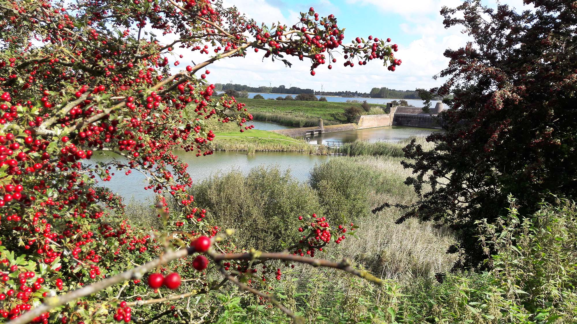 wandelen langs het veerse meer bij veere