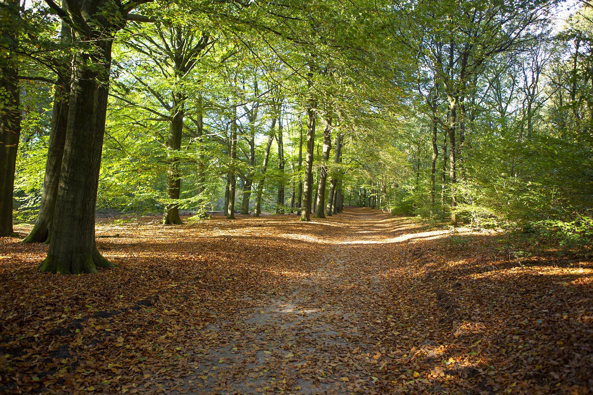 Weekendje weg Utrechtse Heuvelrug herfst