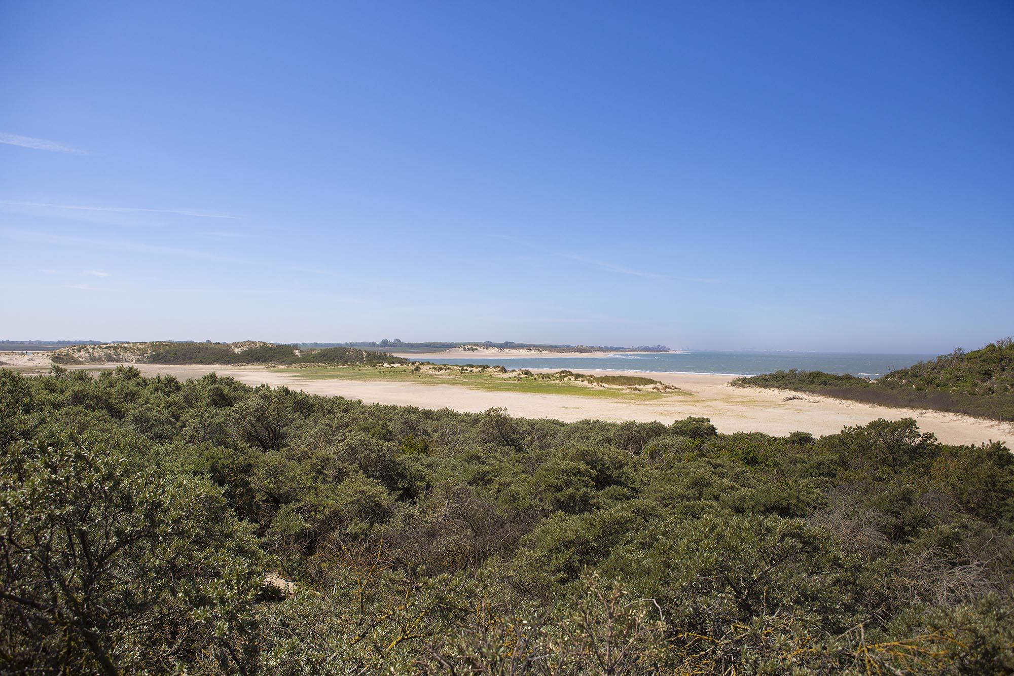 Natuurgebied het Zwin in Zeeland